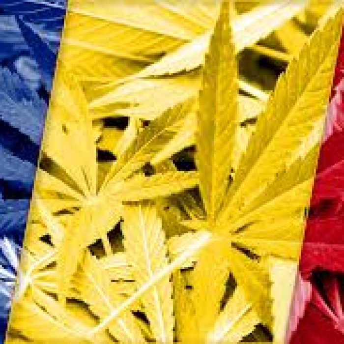 Colombia on its way to become a medical cannabis power